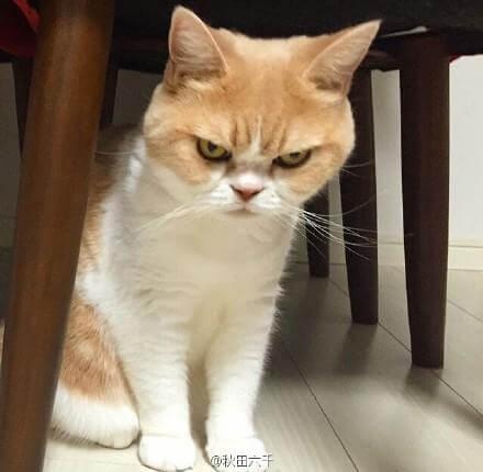 最容易暴露一个人为人的时候是生气!