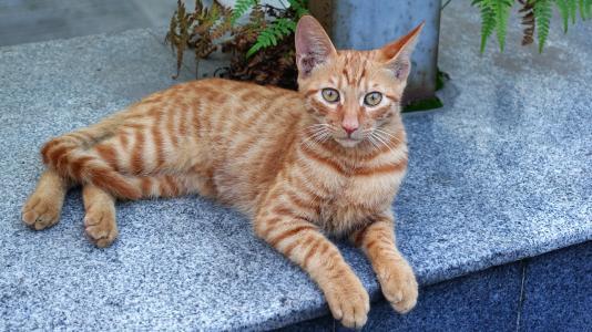 怎么看待小区流浪猫喂养?