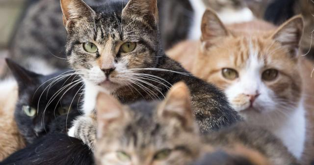 喂养流浪猫是在滥用爱心!反对者的吐槽是言之有理还是天生冷血