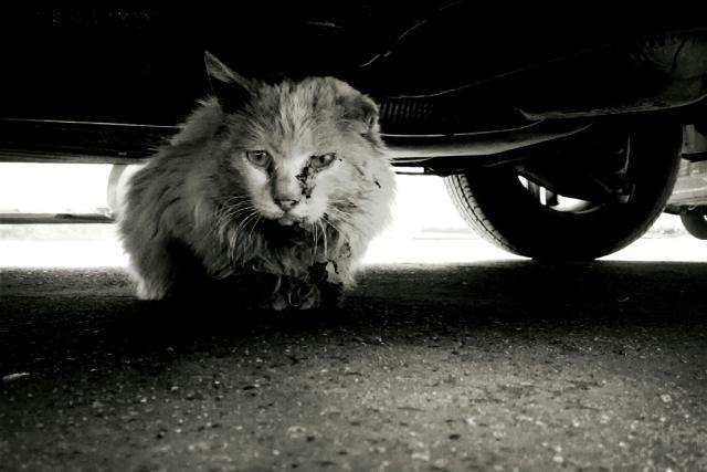 给予流浪猫喂食,到底是善举还是好心办坏事?所以我们该不该喂食