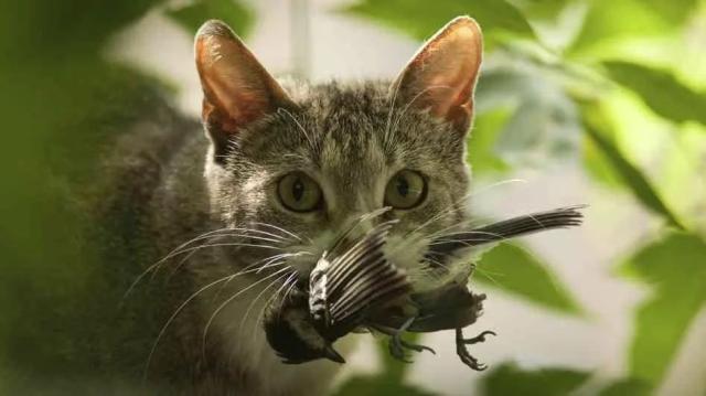 流浪猫泛滥,人类的自我拯救