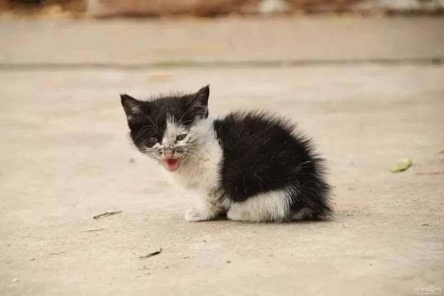 大脸猫:如何才能科学理性的救助流浪猫