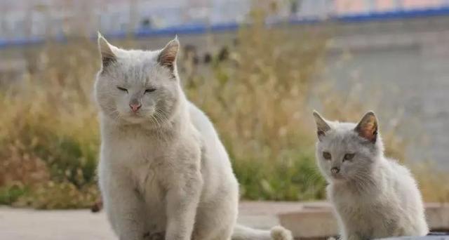 大脸猫:什么情况下的猫咪适宜救助?