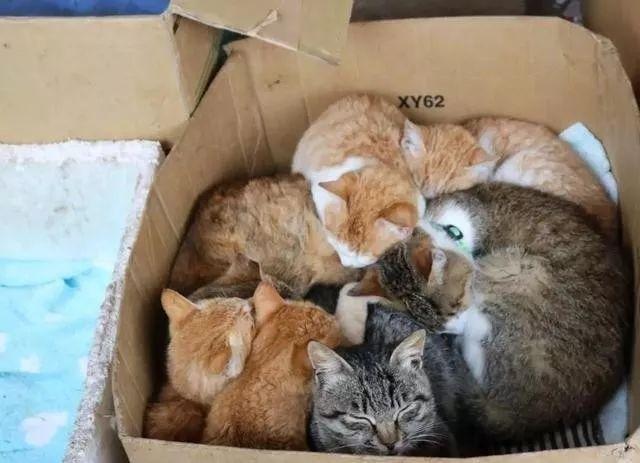 大脸猫:关于流浪猫的住所