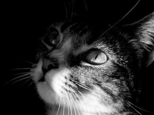 大脸猫:优秀作者,养原则「天晴喵」领
