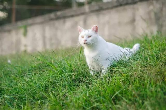 爱笑君:我因为什么成了一只流浪猫?