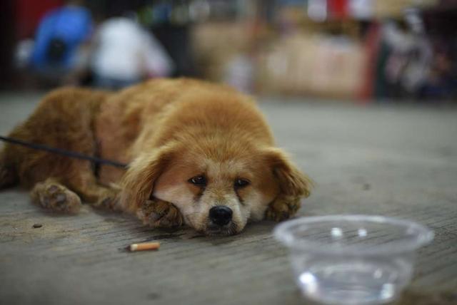 为什么我们都应该去领养宠物,而不是从宠物店去买呢?